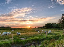 herd-of-sheep-on-grass-field-462119.jpg